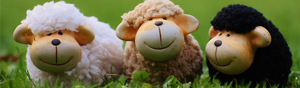 Glueckliche Schafe
