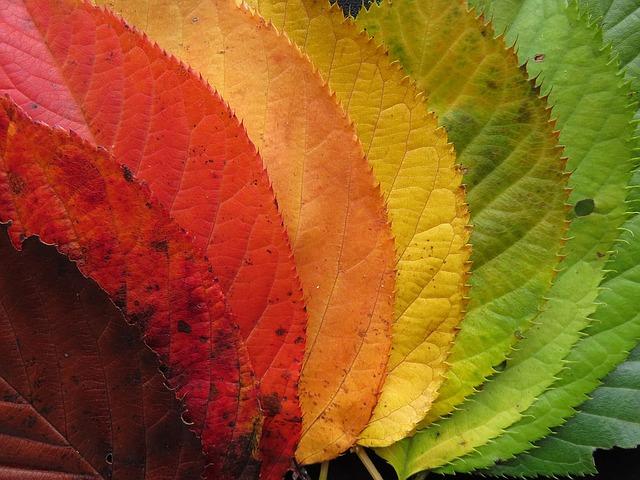Herbstfarben Blaetter